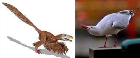 Więcej podobieństw niż różnic: deinonychus i mewa