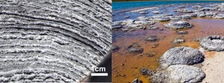Po lewej: prawdopodobnie najstarsze znane skamieniałości -- stromatolity sprzed 3.45 miliardów lat (Allwood et al. 2009, PNAS); po prawej -- współczesne stromatolity z Australii