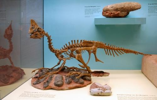 Początkowo sądzon, że oviraptor wyżerał jaja innych dinozaurów. Później okazało się, że oviraptory opiekowały się swoimi gniazdami.